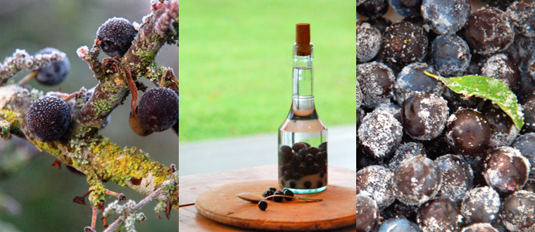 3 images of sloes and sloe gin