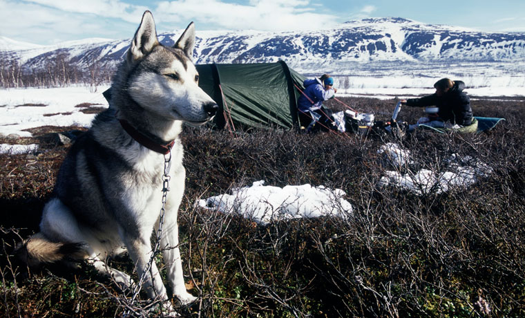 Camping with dogs in the winter
