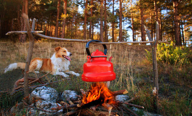 Dog sitting by campfire