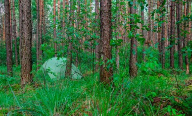 Stealth Camping in the Forest