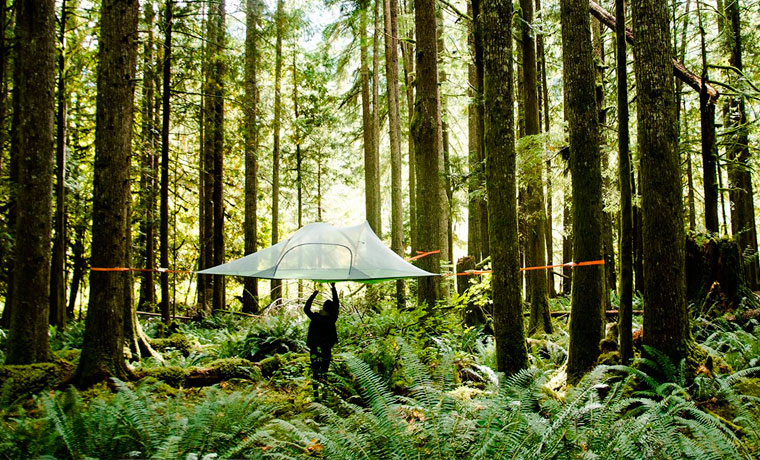 Tentsile suspended tent in woodland