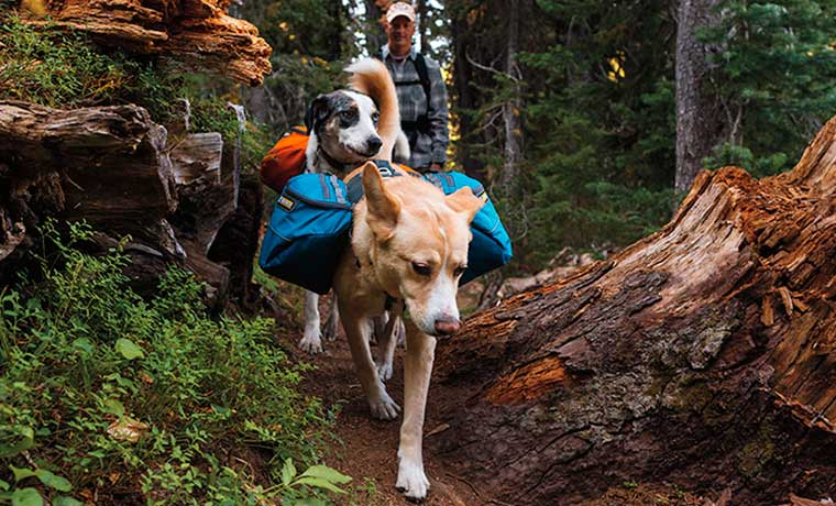 Man backpacking with dogs in the forest