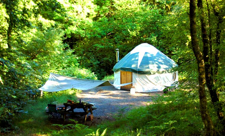 Yurt in the forest