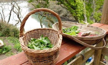 Baskets of foraged food
